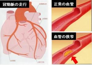 循環器心臓